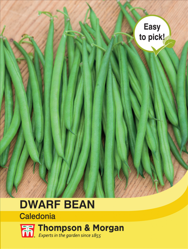 Dwarf Bean Caledonia