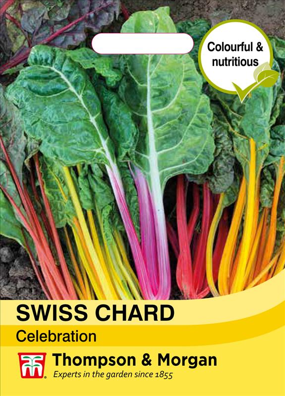 Swiss Chard Celebration