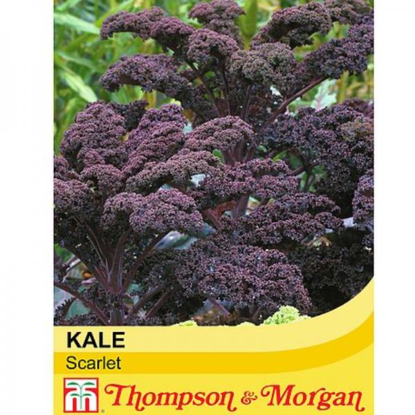 Kale Scarlet