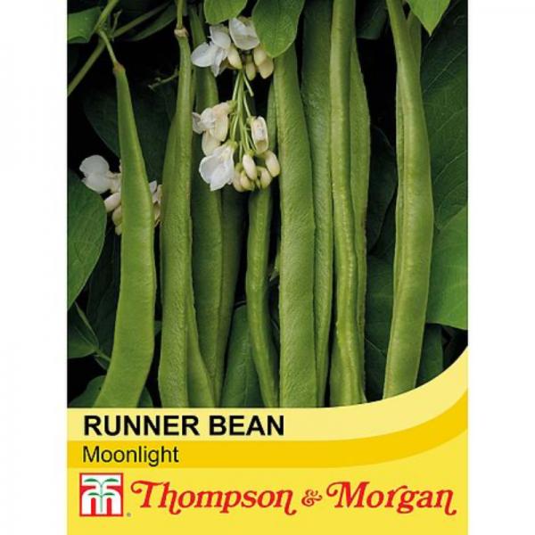 Runner Bean Moonlight