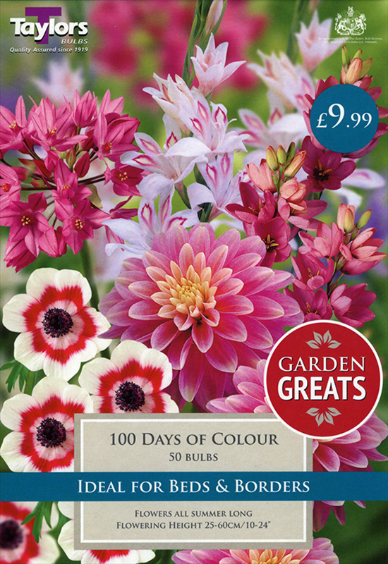 100 Days Of Colour Coll