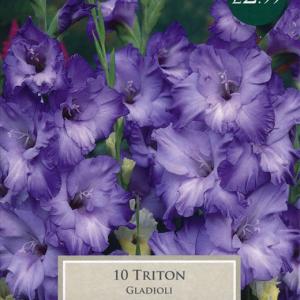 Gladioli Triton 10-12