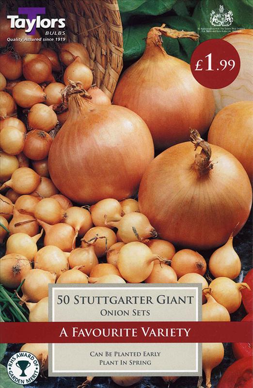 Onion Stuttgarter Giant
