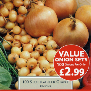 Onion Value Stuttgarter Giant