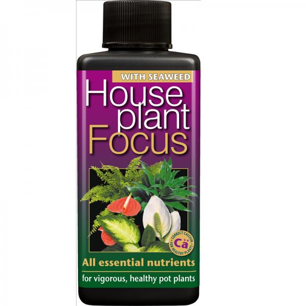 Houseplant Focus