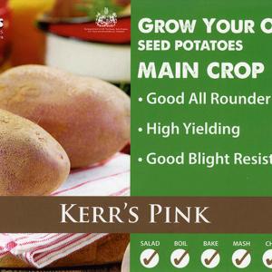 Kerr's Pink  2kg