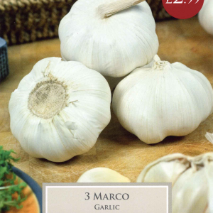 Pre Pack Garlic Marco