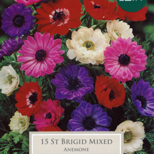 Anemone St Brigid - Bee Friendly
