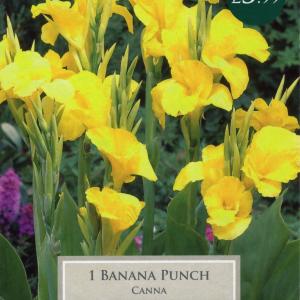 Canna Banana Punch I