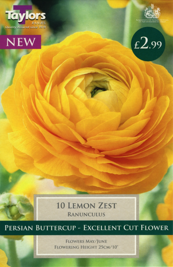 Ranunculus Lemon Zest