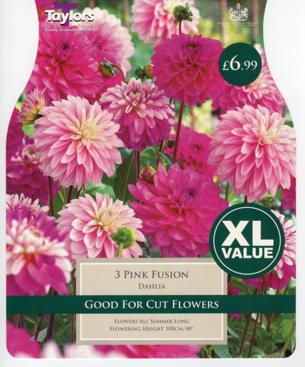 XL Value Dahlia Pink