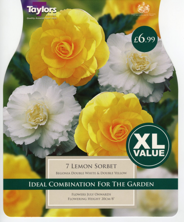 XL Value Begonia Lemon