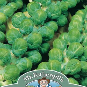Brussels Sprout Evesham