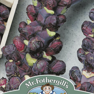Brussels Sprout Rubine