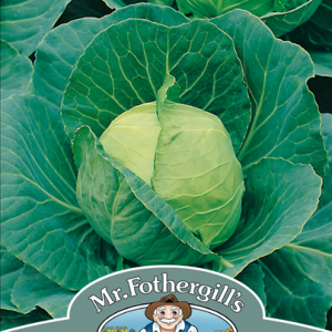 Cabbage Golden Acre (Primo II)
