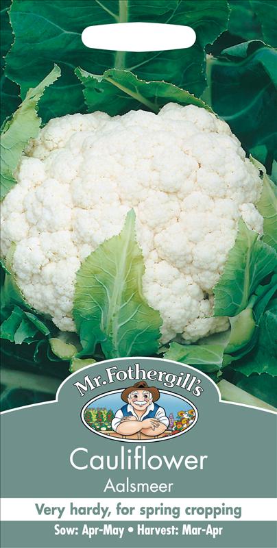 Cauliflower Aalsmeer