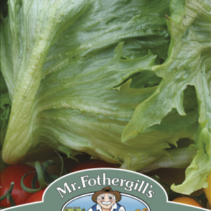 Lettuce Frisee De Beaur