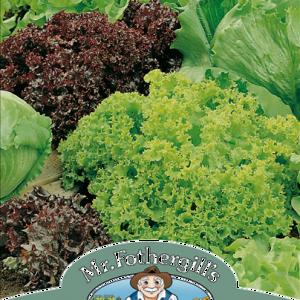 Lettuce Headed Mixed