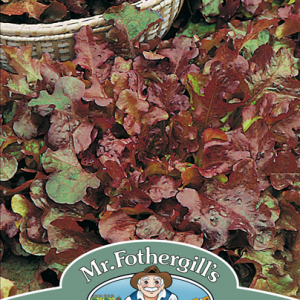 Lettuce Salad Bowl Red