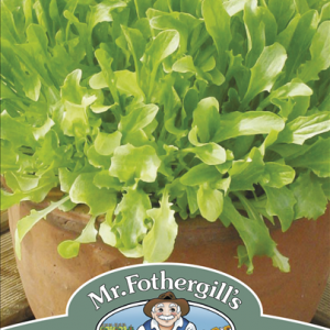 Mixed Lettuce Green Leaf