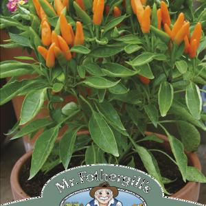 Pepper (Hot) Orange Wonder