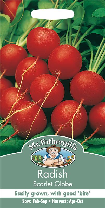 Radish Scarlet Globe
