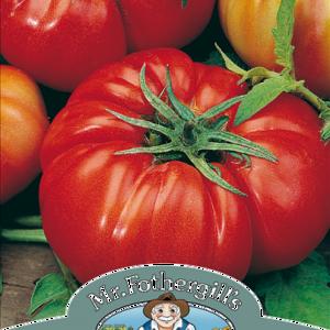 Tomato Costoluto Fiorentino