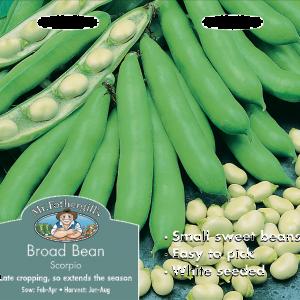 Broad Bean Scorpio