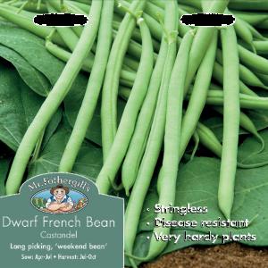 Dwarf French Bean Castandel