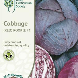 RHS Cabbage (Red) Rookie