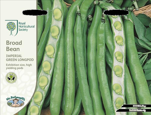 RHS Broad Bean Imperial