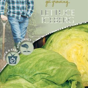 David Domoney Lettuce Iceberg