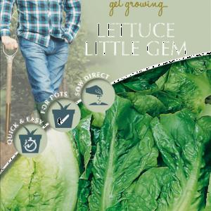 David Domoney Lettuce Little Gem