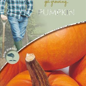 David Domoney Pumpkin