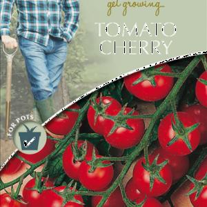 David Domoney Tomato Cherry