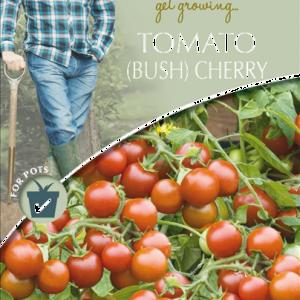 David Domoney Tomato (Bush) Cherry