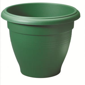 50cm Green