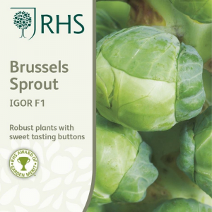 RHS Brussel Sprout Igor