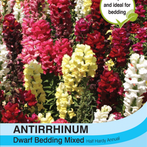 Antirrhinum Dwarf Bedding Mixed