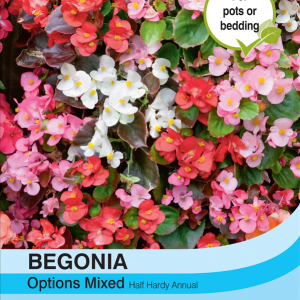 Begonia Semperflorens Mixed