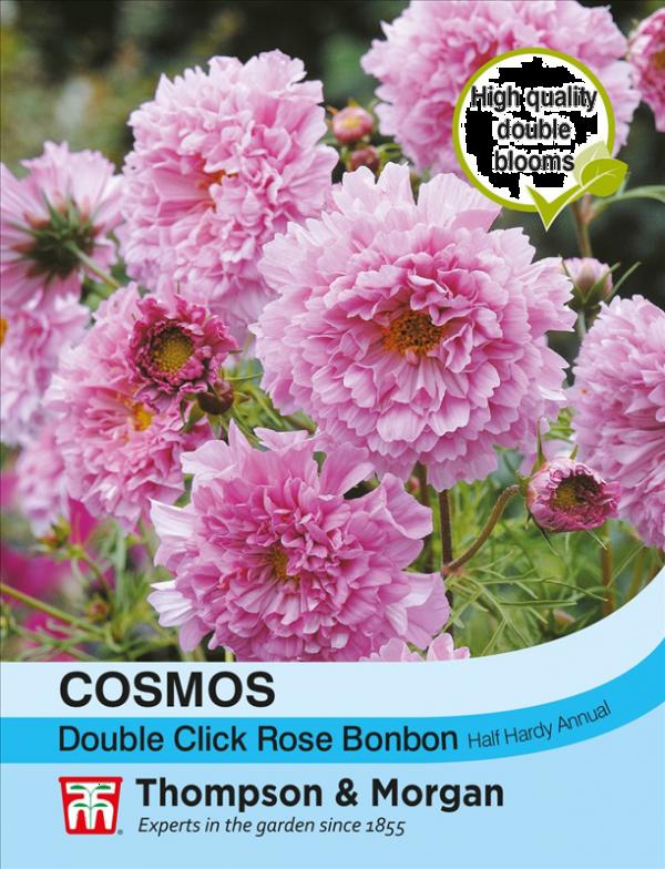 Cosmos Double Click Rose Bonbon