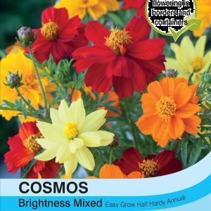 Cosmos Brightness Mixed