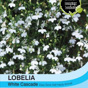 Lobelia White Cascade