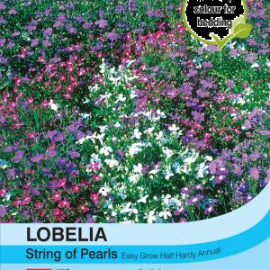 Lobelia String of Pearls Mixed