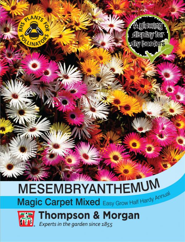 Mesembryanthemum Magic