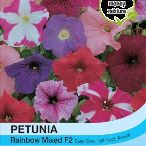Petunia Rainbow Mixed F2