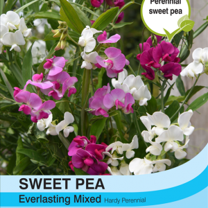 Sweet Pea Everlasting Mixed