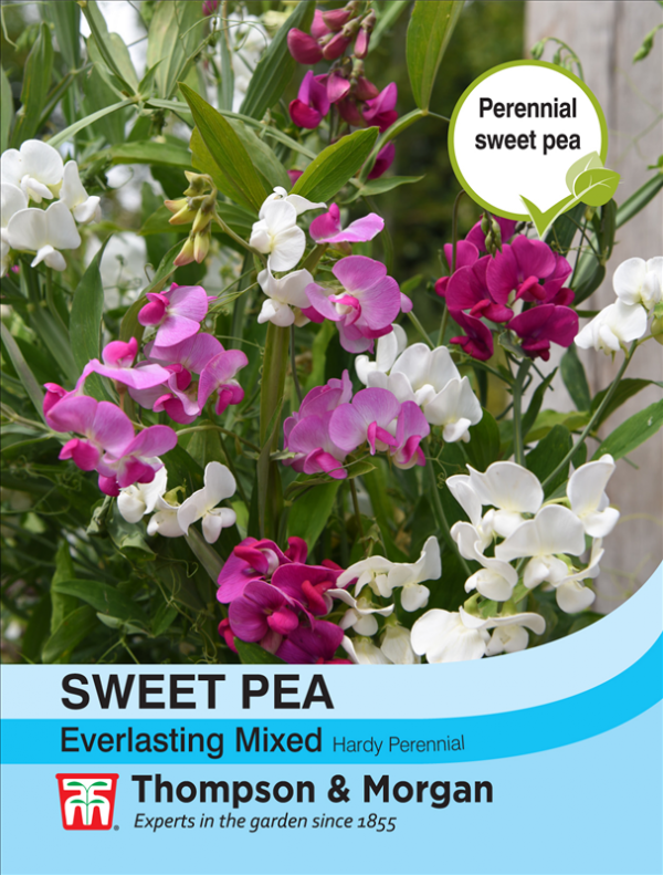 Sweet Pea Everlasting Mixed