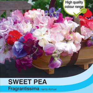Sweet Pea Fragrantissima