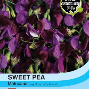 Sweet Pea Matucana